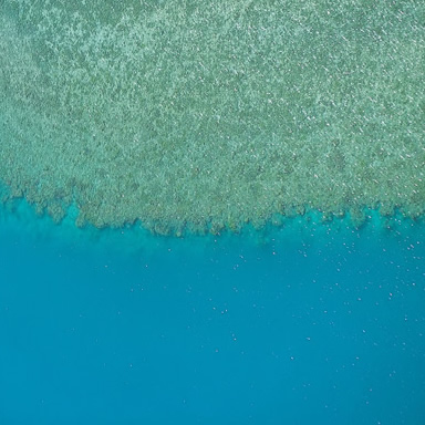 Scuba dive in the Great Barrier Reef